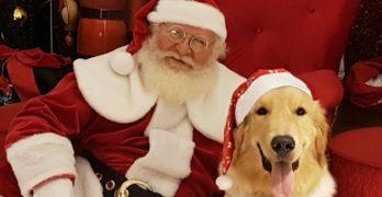 Pets podem visitar Papai Noel até o final de dezembro