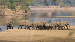 TV Brasil estreia seriado documental Vida Selvagem na África